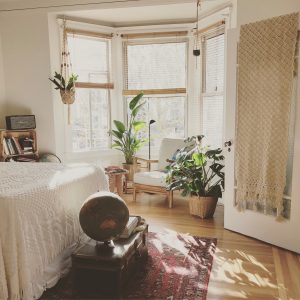 Indoor plants to purify your home this fall  | Shine Soul Bright